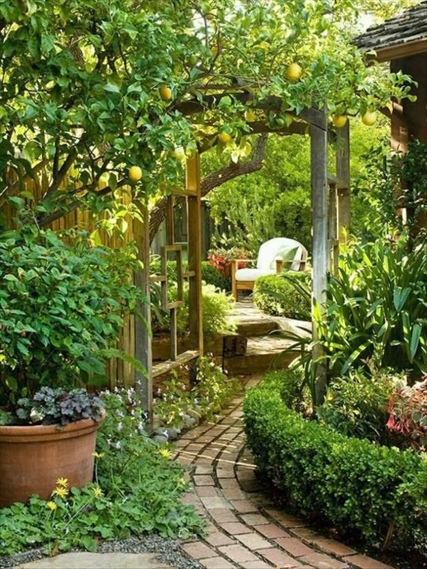 Love The Curved Path Lemon Tree For Side Yard Small Hedge Outdoor Room Series Patios Balconies