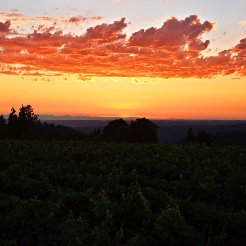 Beautiful Sunset From The Vineyards At Grace Patriot Wines