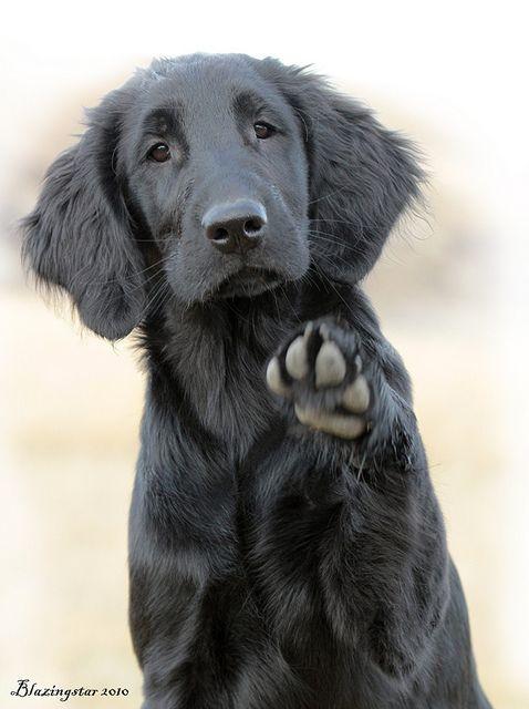 Hi I M Puffin Dogs Cute Dogs Cute Animals