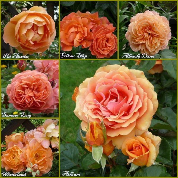 Foto Mein Schoener Garten De http mein schoener garten de jforum posts list 3260801 page