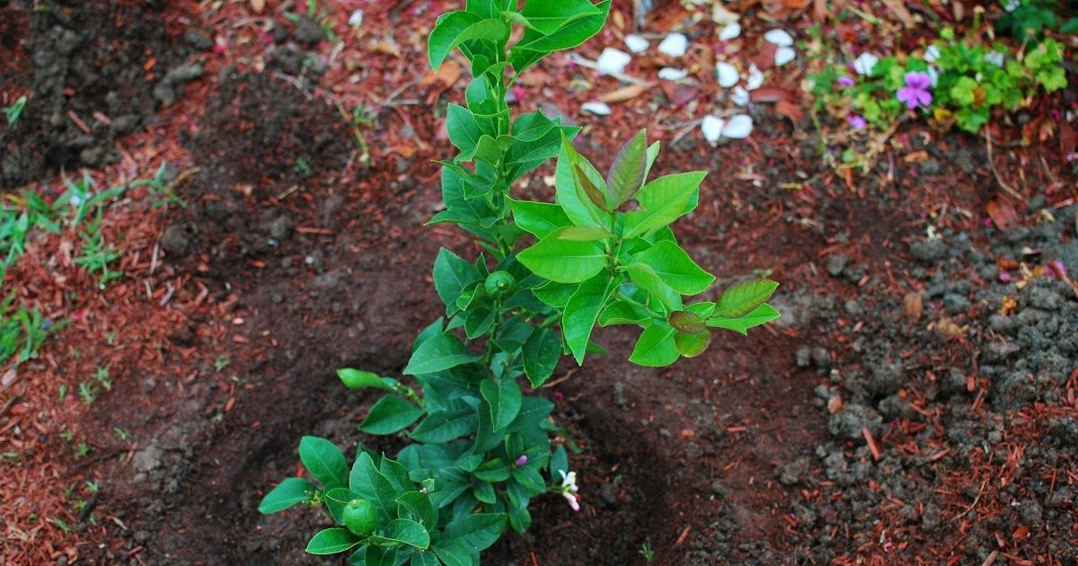 Image Result For Armstrong Garden Center Image Result For Armstrong Garden Center Image Result For Armstrong Gard Garden Center Perfect Plants Green Industry