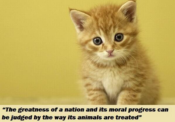 Internet Cats (CatsInternet) on Twitter