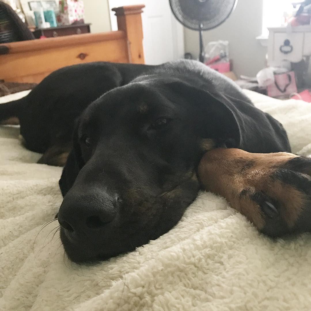 Dakotarhinehart dakotaraegrace hounddog petpetlover dog