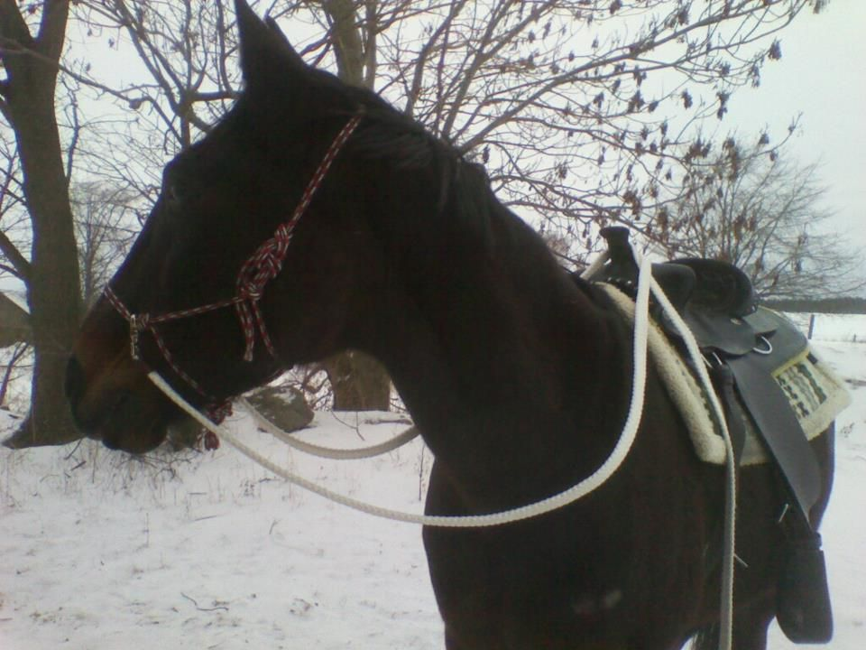 My own horse :)
