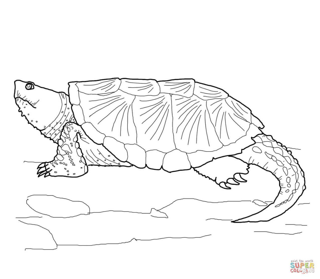 Schnappschildkröte   Super Coloring   Schnappschildkröte ...