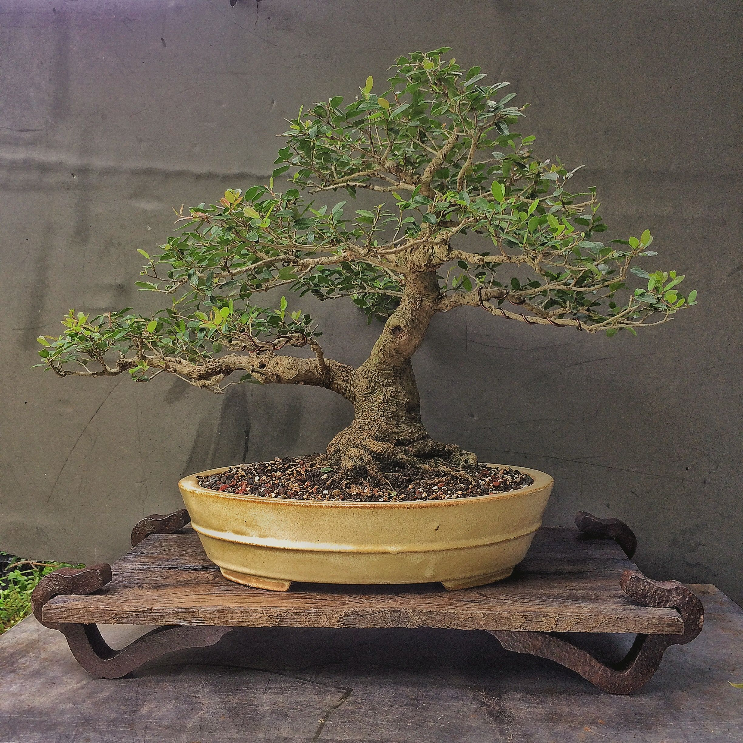 Building a display stand for a bonsai | Adam's Art and Bonsai Blog