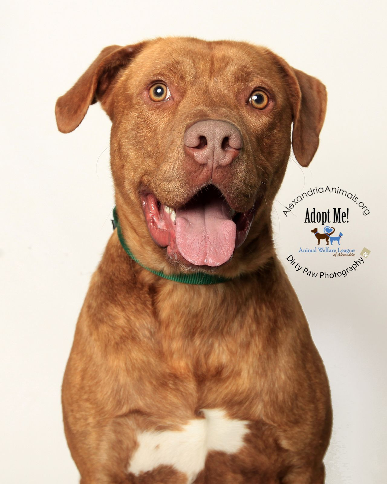 Animal Welfare League Of Alexandria A067036 Tanner Fur Babies