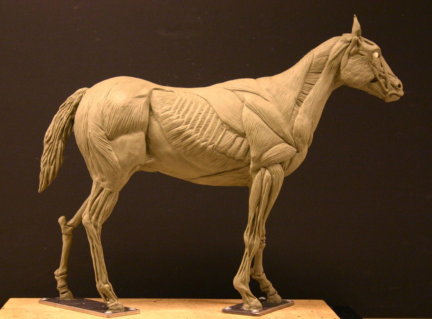 Horse anatomy artists pdf to jpg