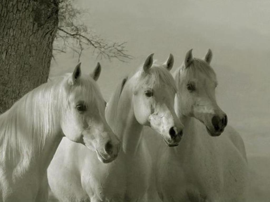 Wonderful Wallpaper Horse Creative - 82c3c9ccf94e7d791507ab8c66b3e700  HD_913081.jpg