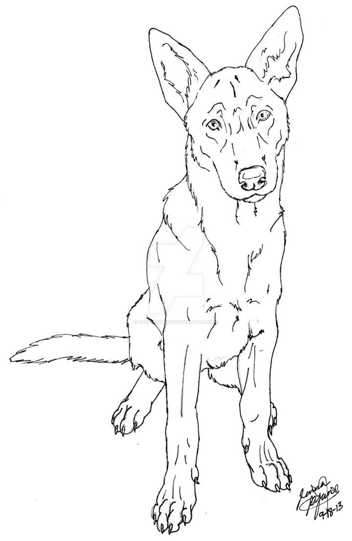 Coloriage Chien Malinois.Belgian Malinois By Canis Simensis On Deviantart En 2019