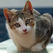 Risultati immagini per gatto spiritoso