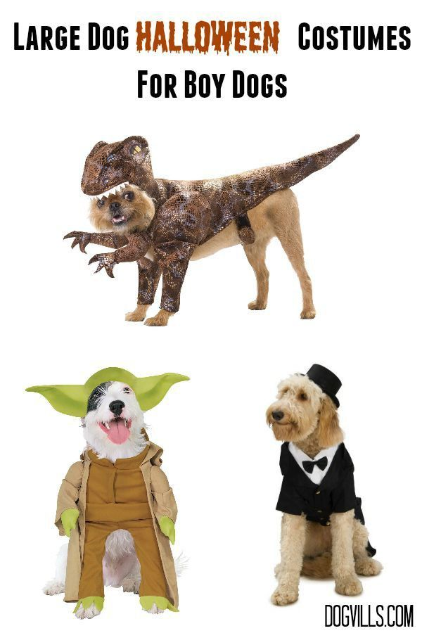 large dog halloween costumes for boy dogs tap the pin for the most adorable pawtastic fur baby apparel youll love the dog clothes and cat clothes