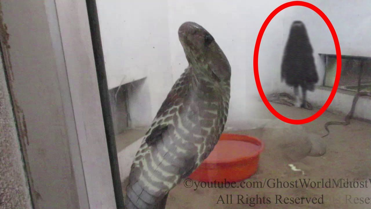 SCARY GHOST VIDEOS Real Ghost Caught On Tape In The Snake Cage Scary Vid...