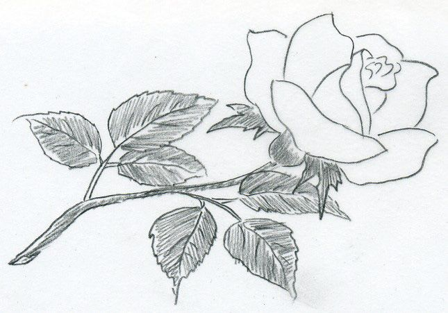 17 Best images about Flowers: on Pinterest | Pencil drawings ...