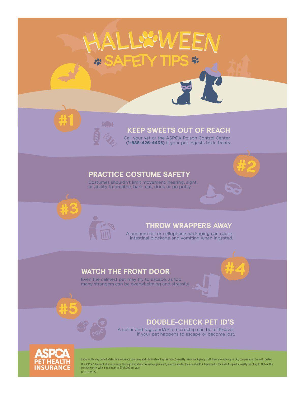 Halloween Safety Tips.jpg Teach dog tricks, Cat care