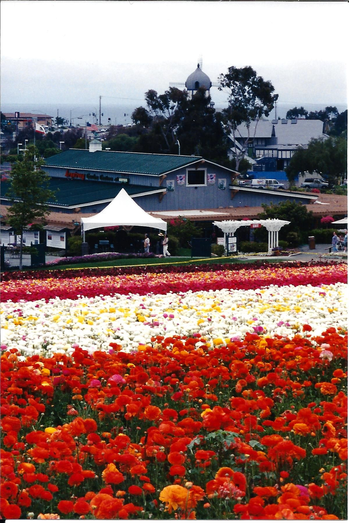 Flower Fields And Armstrong Nursery