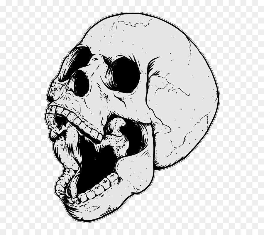 Skull Drawing Png Download 800 800 Free Transparent Skull Png Skull Drawing Drawings Skull