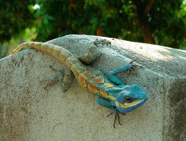 48+ Lizard god information