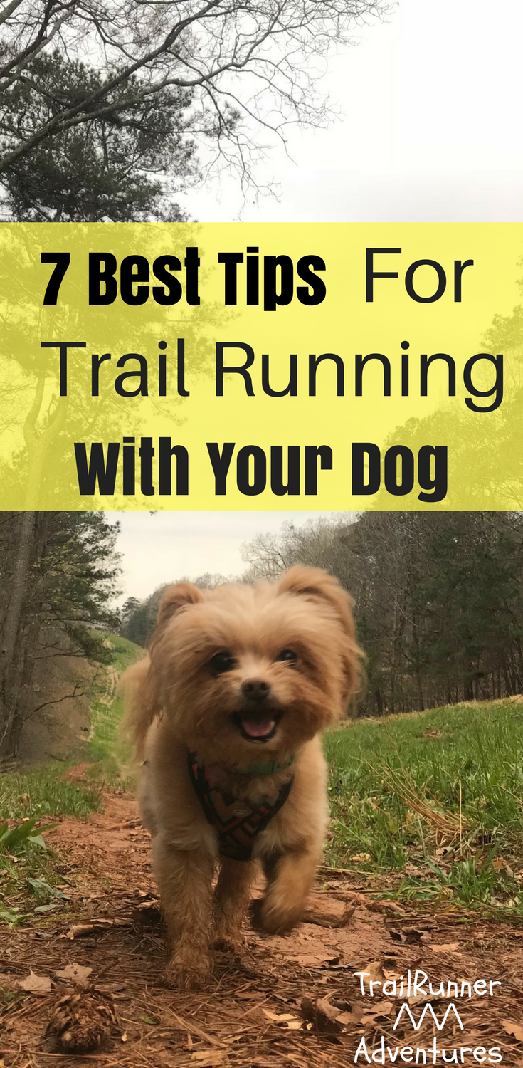7 Tips for Running with Your Dog recommendations