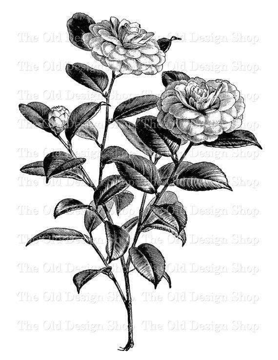 Black And White Clipart Old Design Shop Blog Part 12 Flower Illustration Flower Drawing Clip Art Vintage