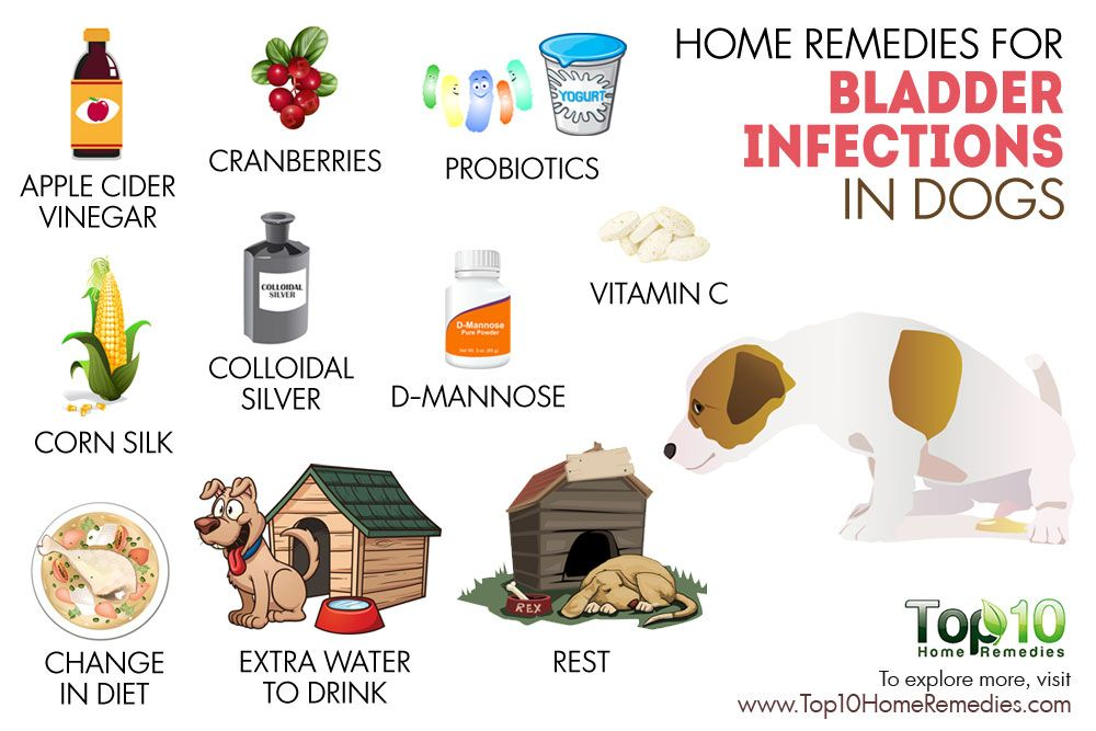dog has uti home remedy