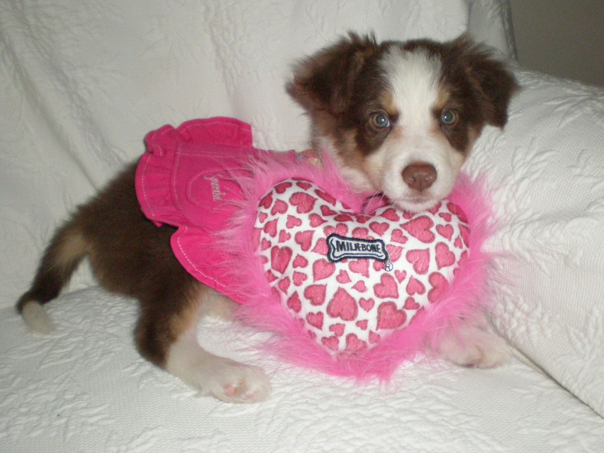 My Favorite Puppy Picture Of Chloe Belle Puppy Pictures Baby