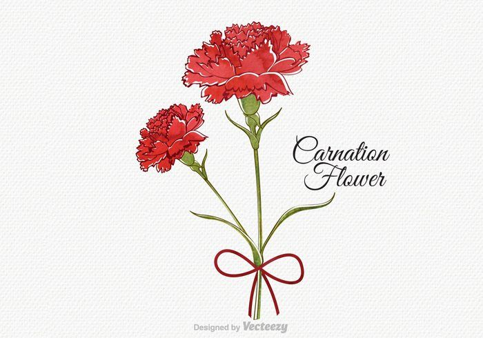 Free Vector Watercolor Carnation Flower Https Www Welovesolo Com Free Vector Watercolor Carnation Flower Utm Carnation Drawing Carnation Flower Carnations