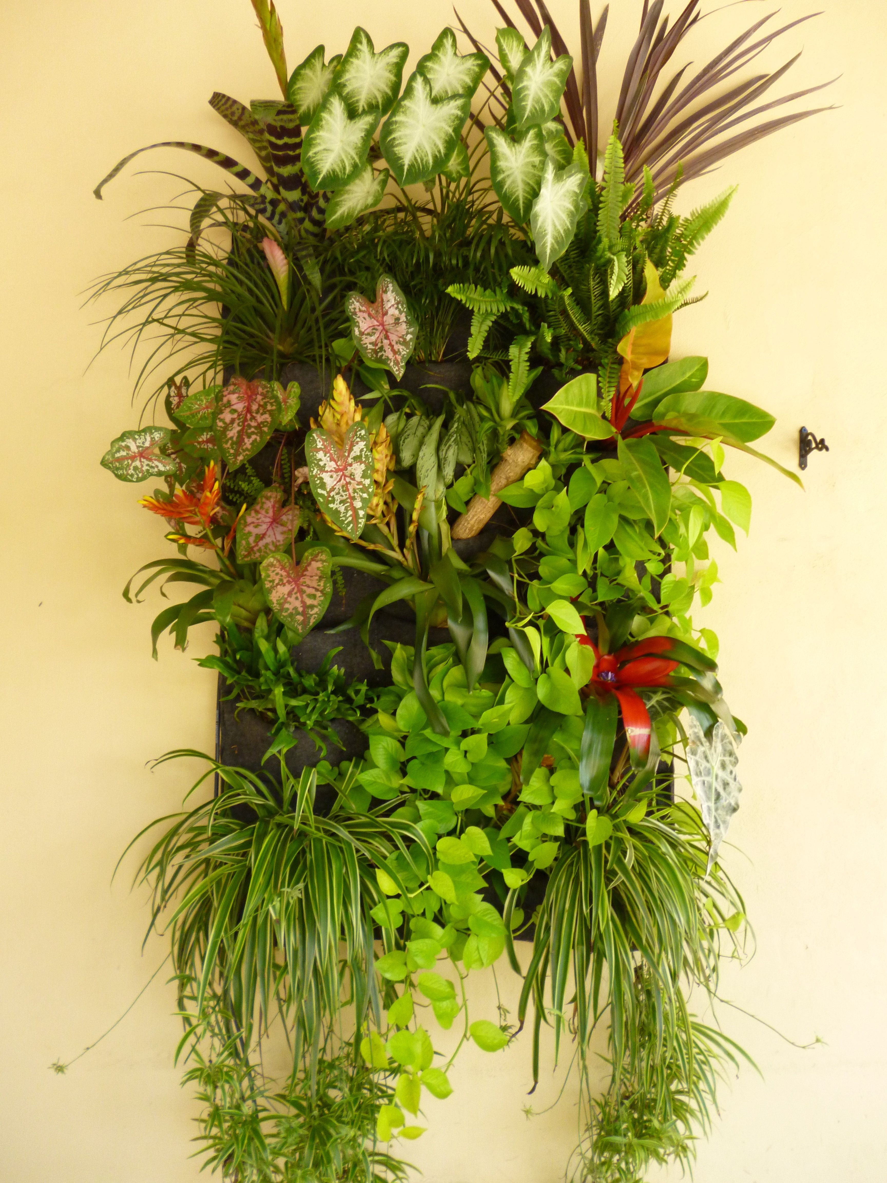 Famous Woolly Pocket Living Wall Planter Crest - The Wall Art ...