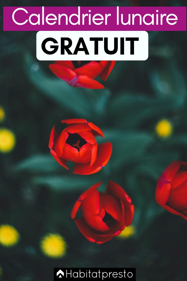 Jardiner Avec La Lune Septembre 2019 : jardiner, septembre, Comment, Jardiner, Calendrier, Lunaire, Lunaire,, Photo, Fleurs,, Photographie, Florale