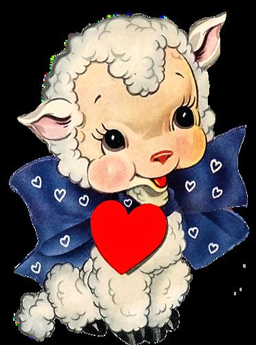 Днем, открытка овцы