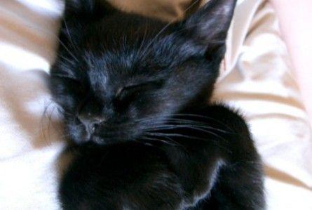 black-cat-sleeping-funny-445x299.jpg (445×299)