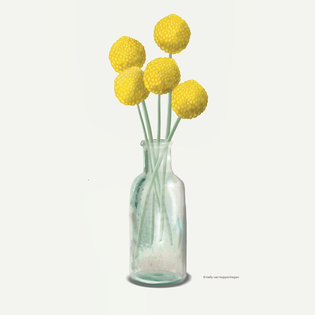 Kelly Van Koppenhagen On Instagram Craspedia Drawingplantlady Craspedia Driedflowers Vase Il In 2020 Craspedia Plant Lady Dried Flowers