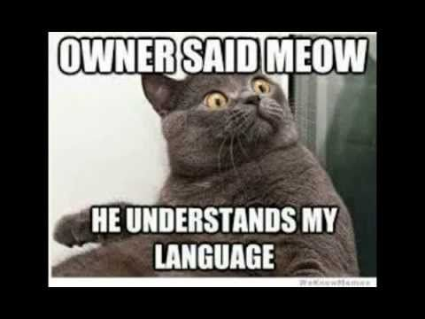 Funny Cat Memes 2014 Animal Memes Cat Quotes Funny Funny Cat Memes Funny Animal Pictures