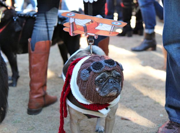 Amelia Earhart Cool Costumes Your Dog Pet Costumes