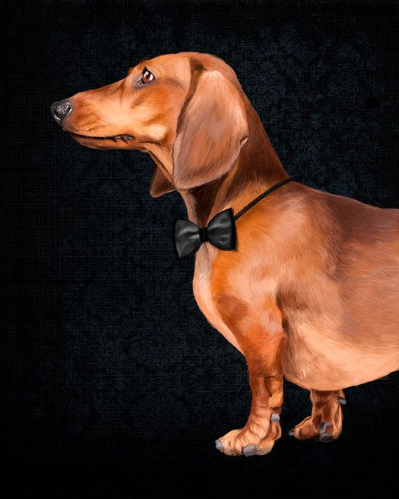 Dachshund portrait 2 poster 12x16 Dog Illustration by SparaFuori