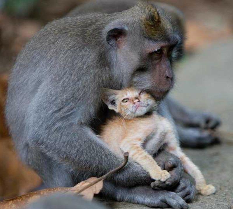 Affen als Haustier Lustige affen, Affe als haustier