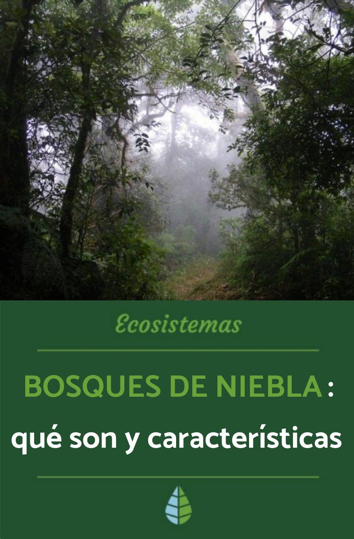 Bosques De Niebla Qué Son Y Características Ecosistemas Tipos De Ecosistemas Bosque