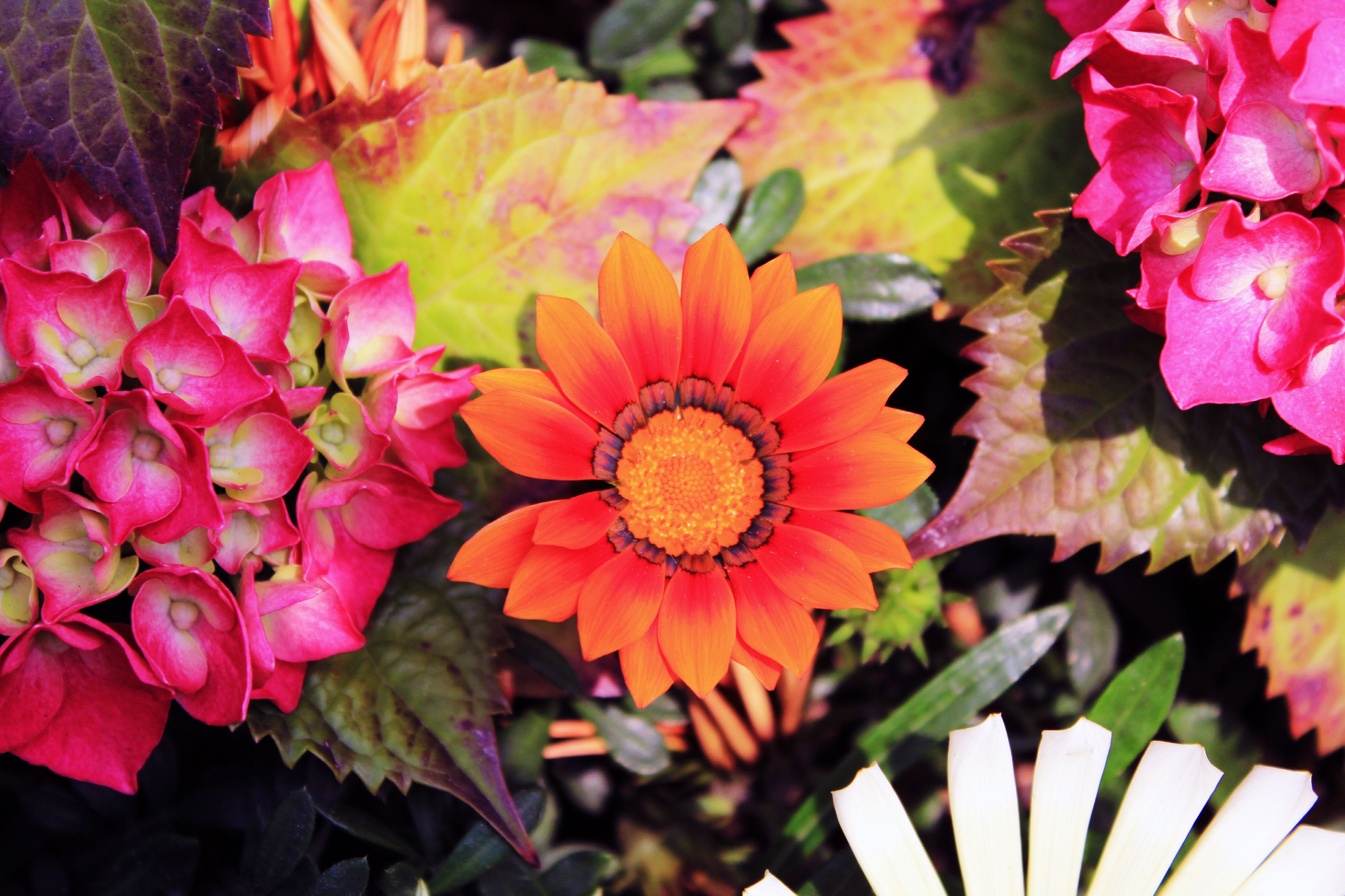 flowers with various colors | Flowers Four Season | Pinterest | Flowers