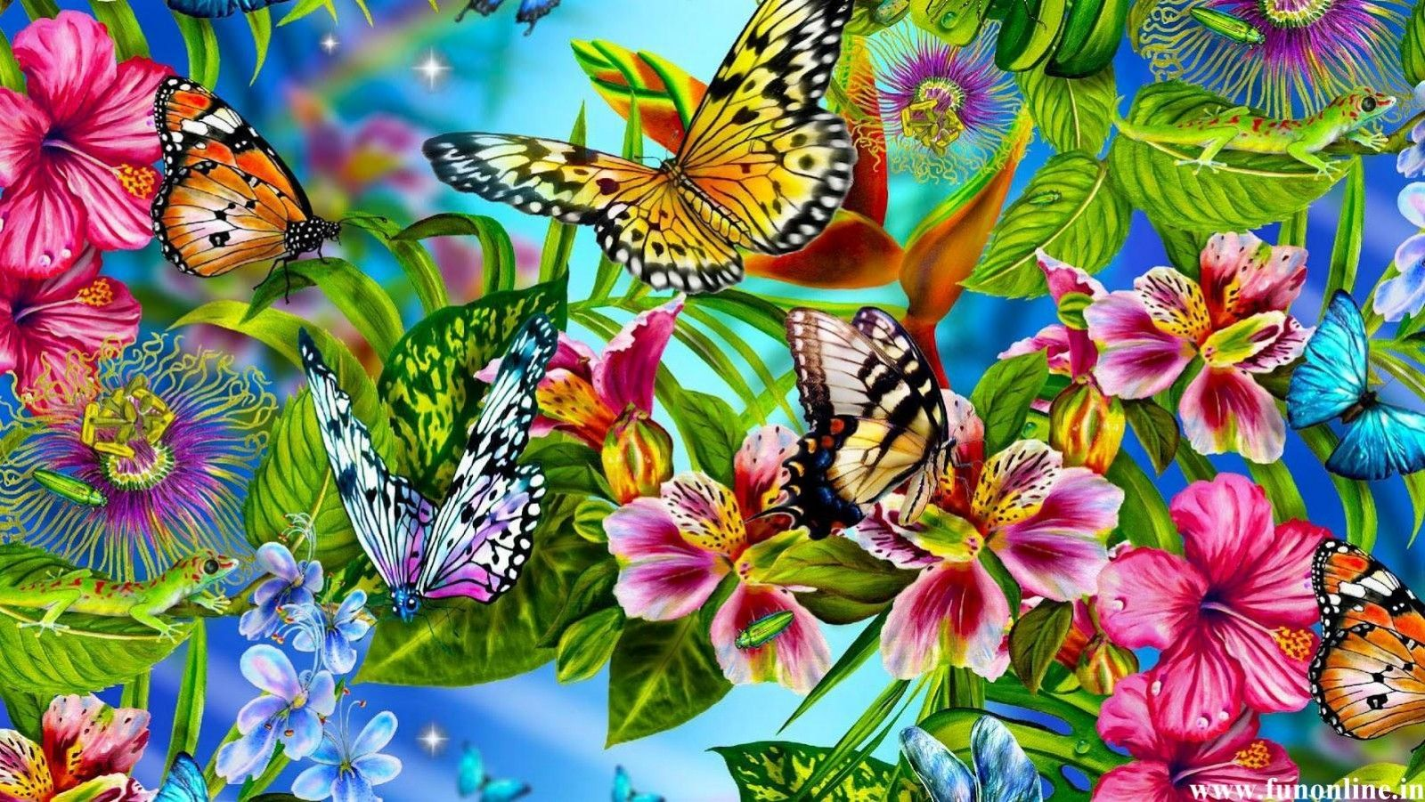 Colorful Butterflies Butterfly Wallpapers Download