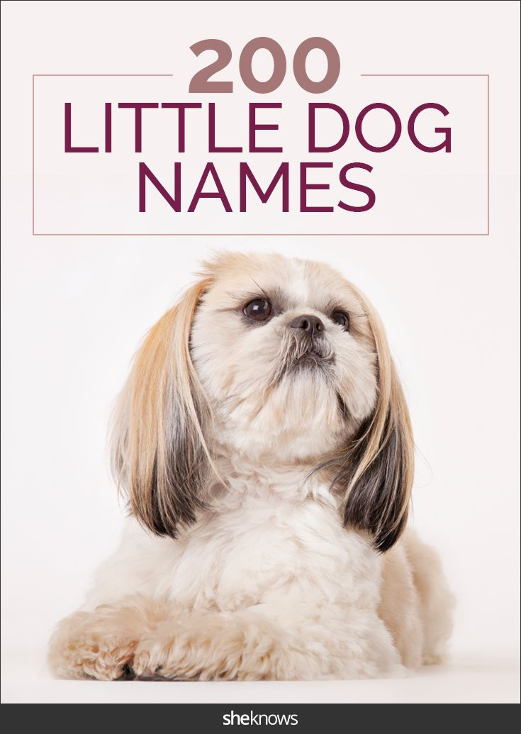 These Cute Dog Names Are Perfect For Tiny Canines With Character