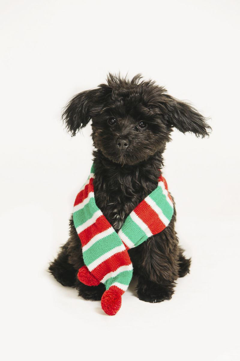 Holiday Photo Booth To Benefit Paws Animal Photography Black