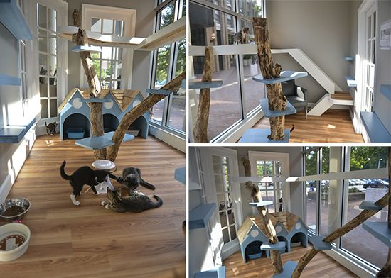Just Cats Clinic In Reston Va Gets Catified Cat Play Rooms