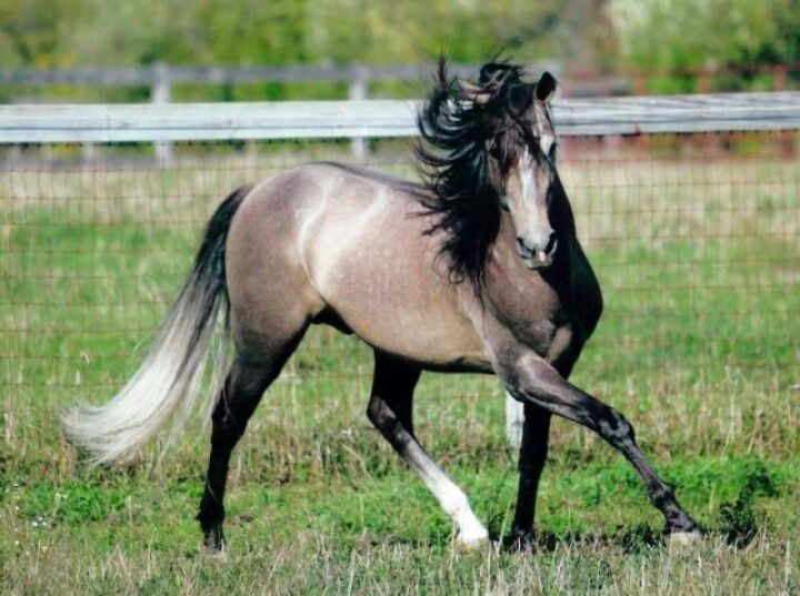 Breeding Andalusians with Classic Beauty and Modern Sporthorse Movement for more than 15 years. Description from avalonandalusians.com. I searched for this on bing.com/images