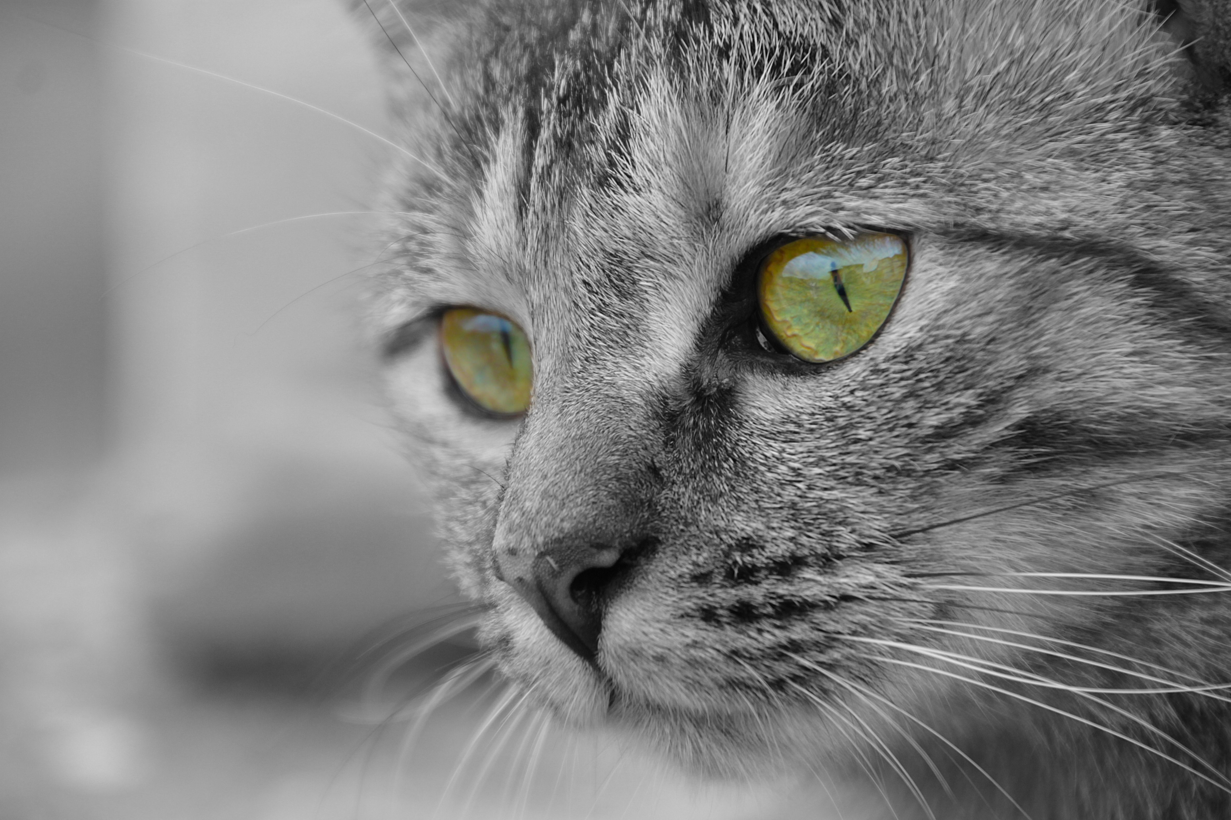 10 Facts About Heartworm Disease In Cats Cat vs dog