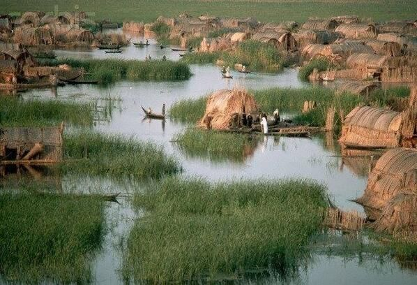 The Garden of Eden, the marshes are #Iraq\'s wildlife jewel, where ...
