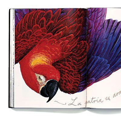 Pancha Tantra by Walton Ford: watercolors