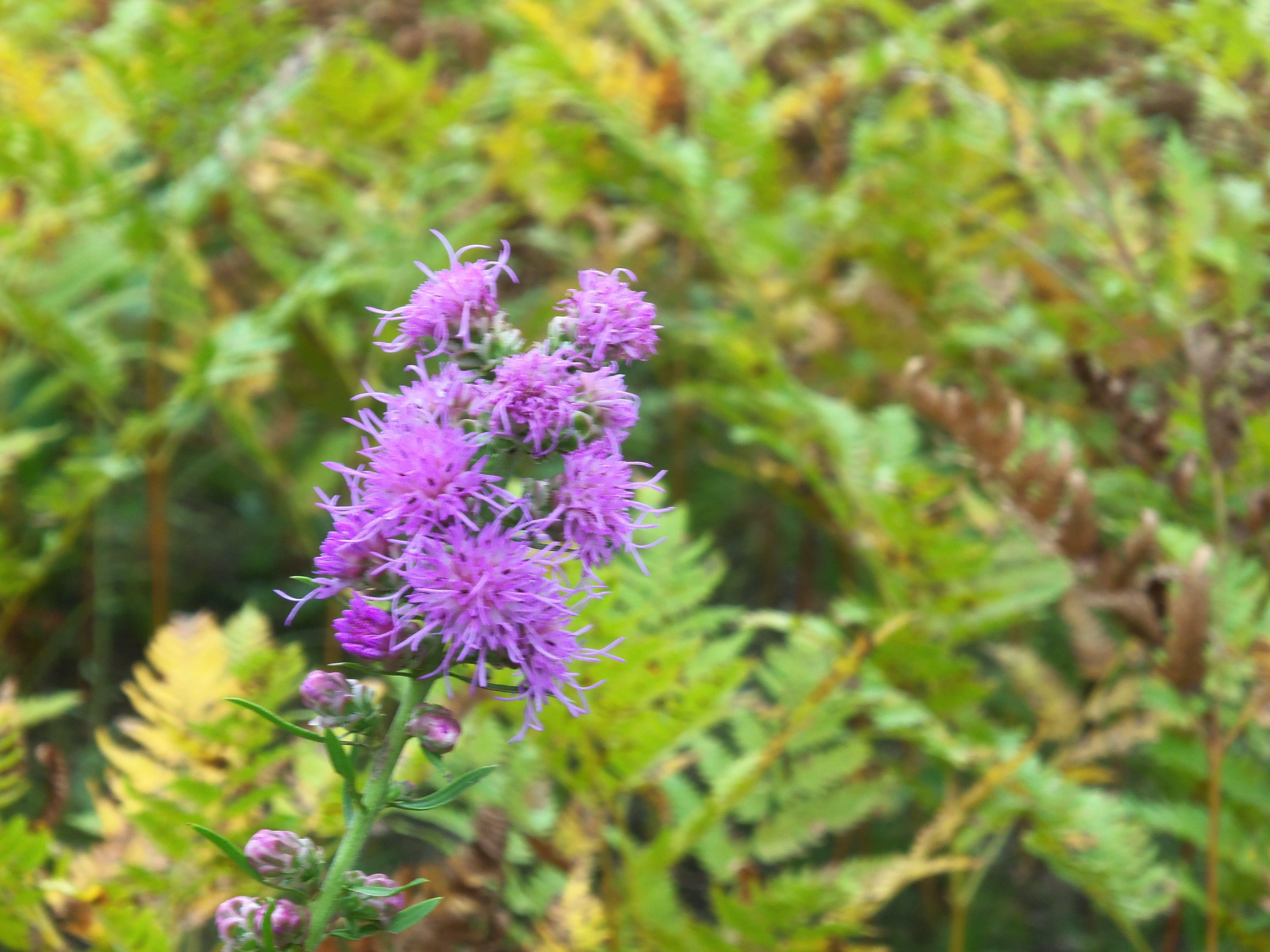Beautiful purple flowering weed plants flowers even