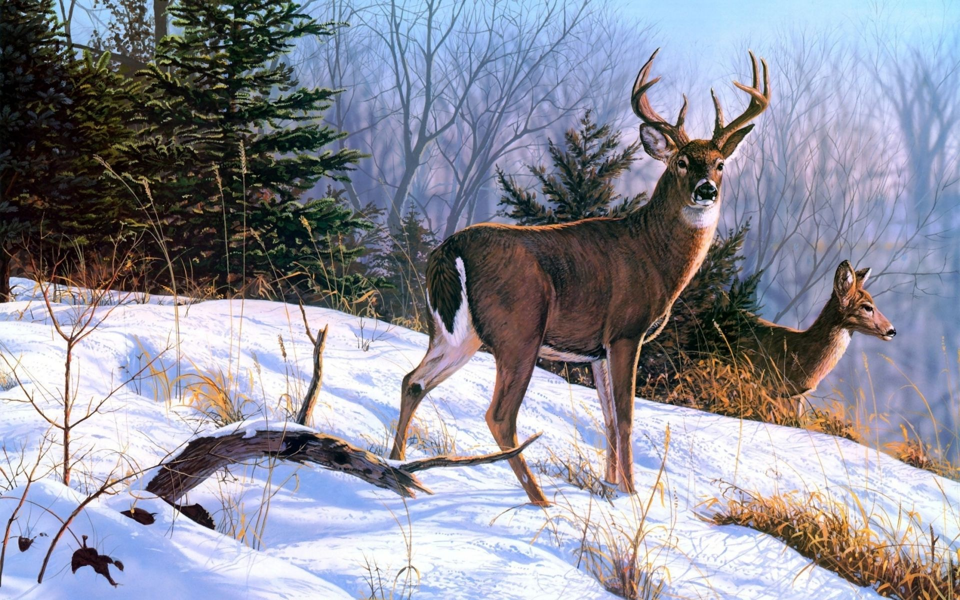 Deer art nature paintings winter wallpaper 1920x1200