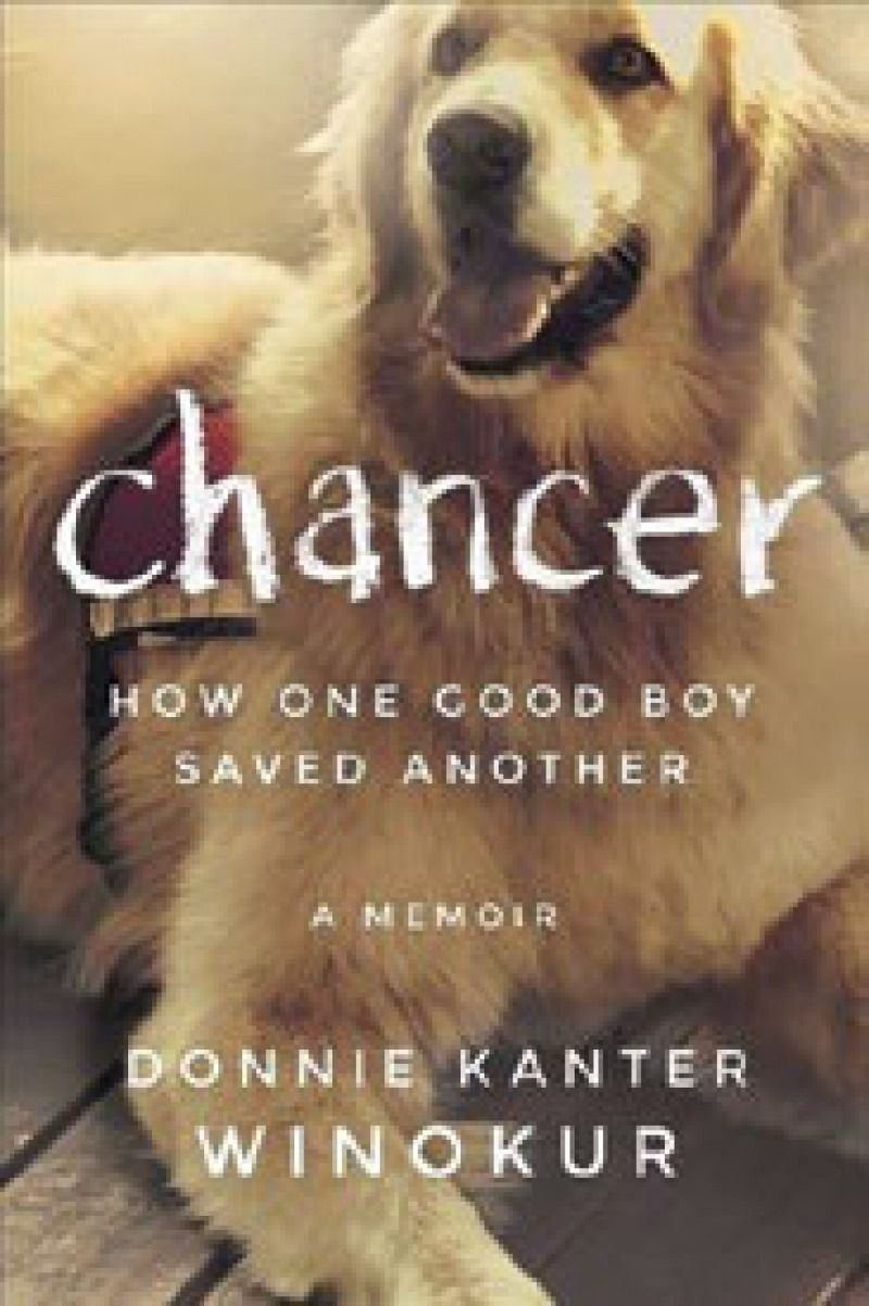 Chancer how one good boy saved another fun to be one