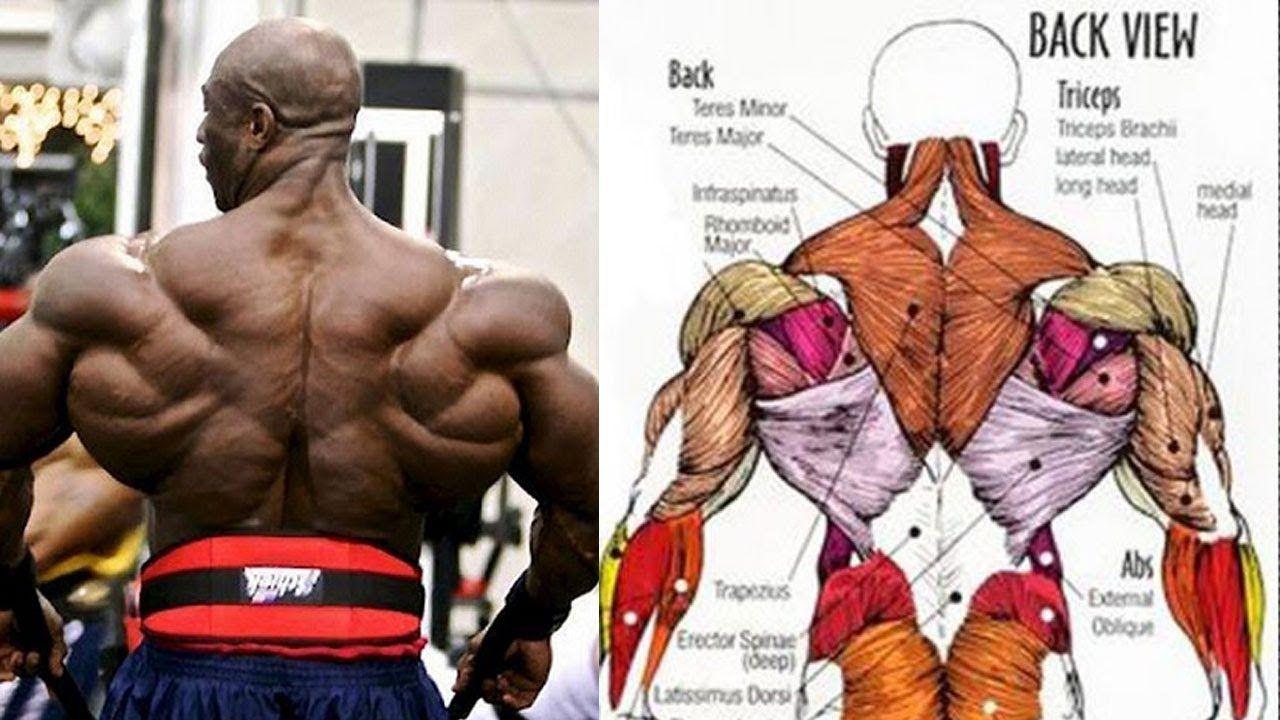 Pin On Back Workout تمارين عضلات الظهر تعريض وتضخيم Https Youtu Be Vtcklrem0xo